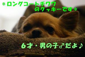 c3df0710.jpg