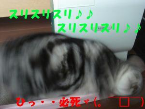 d2c05527.jpg