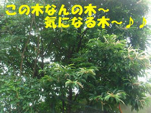 DSC05991.jpg