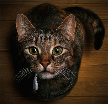 cat_pic.jpg