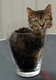 small_cat.jpg