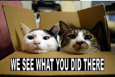 funnycatsgroup4.jpg