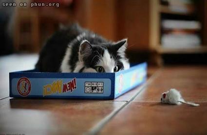 cat_phun_02.jpg