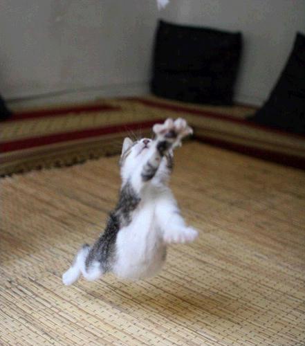 cat_fu.jpg