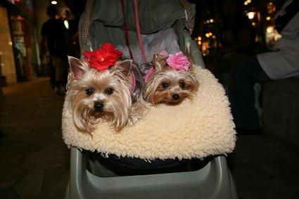 dogs_babycar.jpg