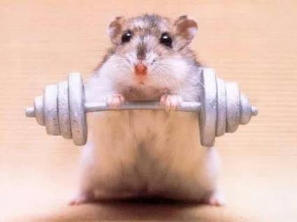 HamsterLifter.jpg