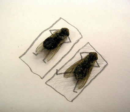 dead_flies_art_03.jpg