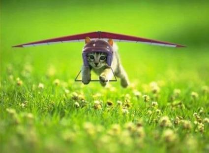 Kitty_Gliding.jpg