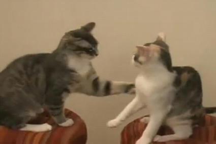 cats_fight.JPG