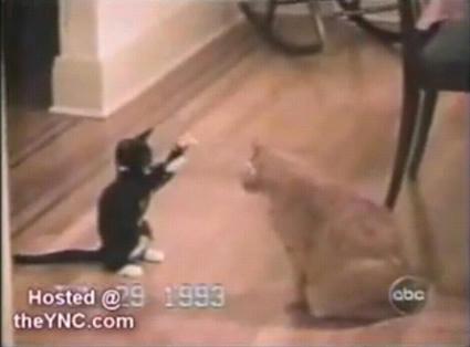 the_best_cat.JPG
