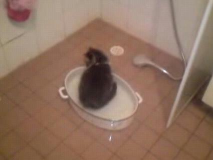 Self_Bathing_Kitten.JPG