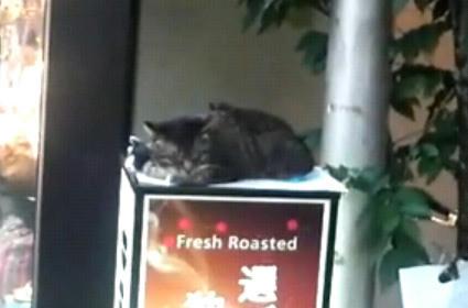 douto_cats.JPG