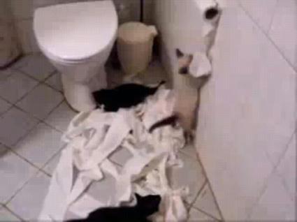 toilet_roll.JPG