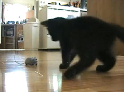 Kitten_with_mouse.JPG