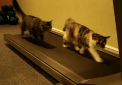 Treadmill_Kittens.JPG