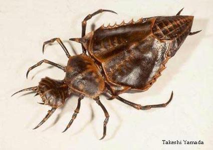 alien_beetle.jpg