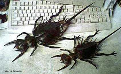 giant_bugs.jpg