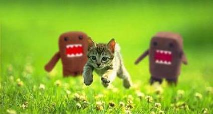 Kitten_chased.jpg