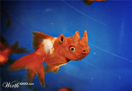 rhinofish.jpg