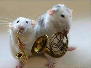 rats-orchestra.jpg