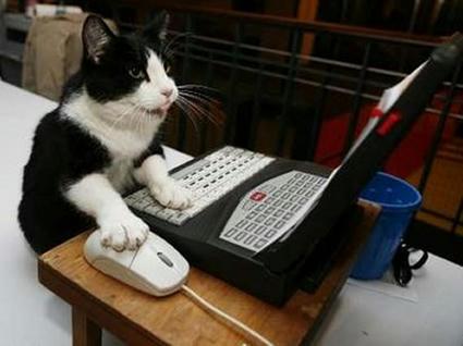 cat_typing.jpg