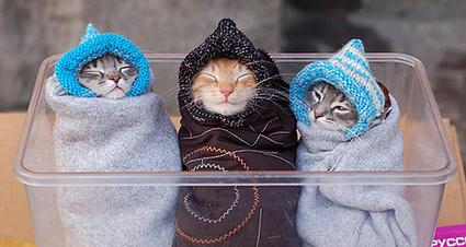cat_roll.jpg