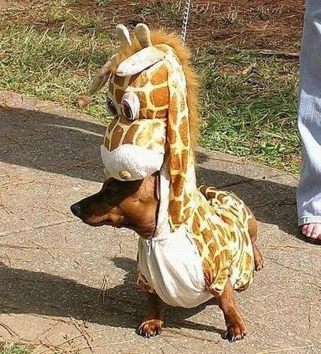 dogs_in_costumes_kirin.jpg