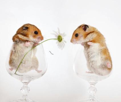cute_hamsters_06.jpg
