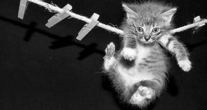 cat_circus.jpg