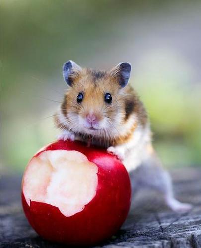 cute-hamsters-5.jpg