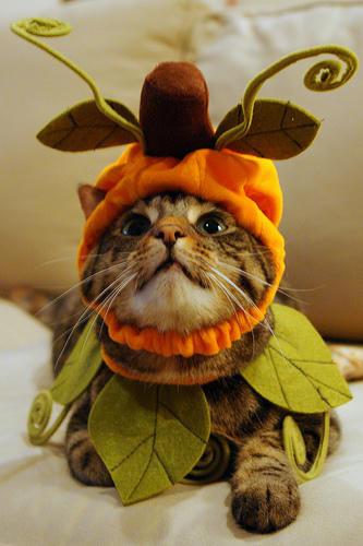 cat_costume_5.jpg