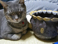 家鴨植木鉢