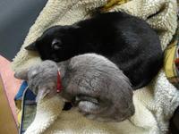 家鴨窯230号 愛猫小春とクロの寄り添う群寝子