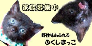 福島仔猫家族募集 黒猫姉妹^^