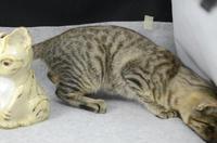 家鴨窯268号 立ち猫貯金箱(序)
