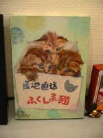 「十猫十色チャリティー猫だらけ展」閉幕しました