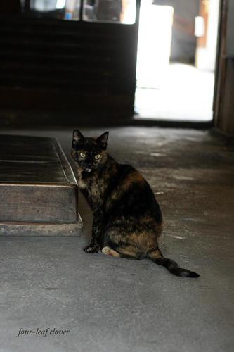 大蔵酒造の猫ちゃん