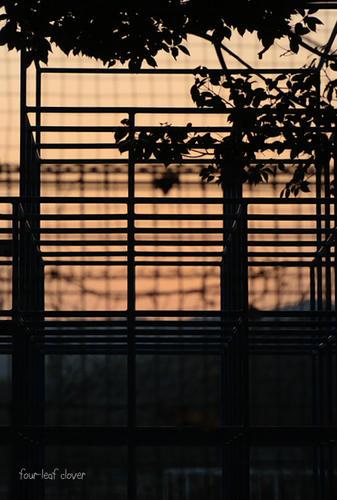 ジャングルジムの夕景