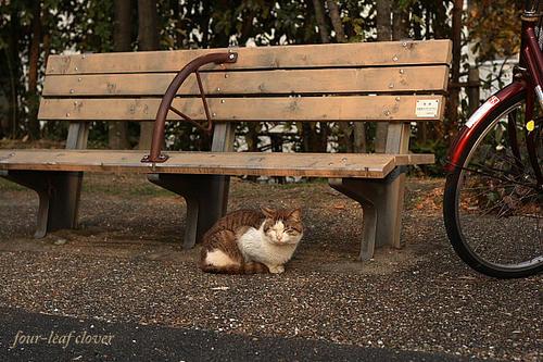 公園の猫ちゃん
