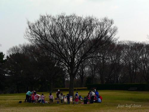 万博公園の木