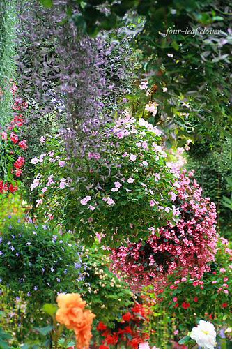 秘密の花園?!