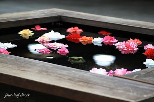 ベゴニアの花が浮かんだテーブル