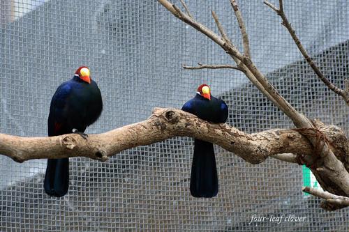 2羽の鳥(1)