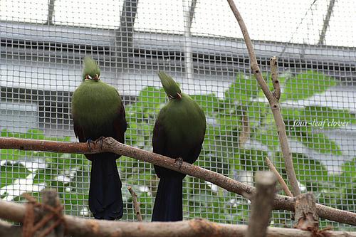 2羽の鳥さん(2)
