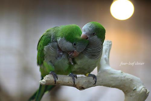 2羽の鳥さん(3)