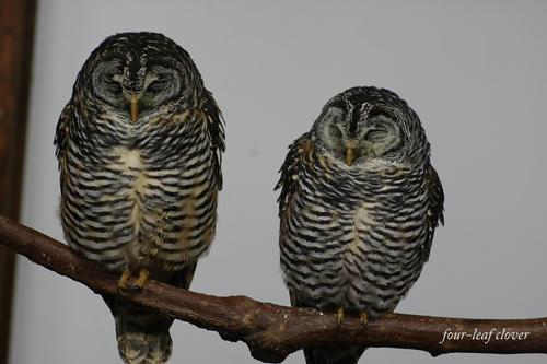 2羽の鳥さん(5)