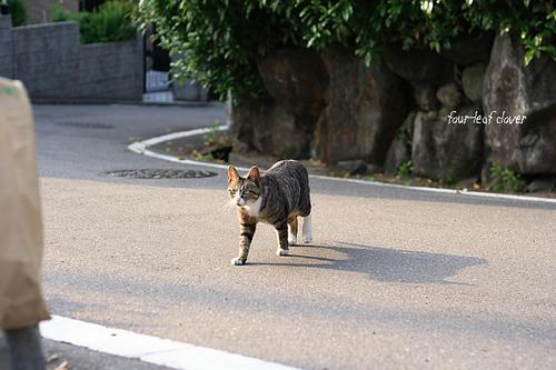 石切で出会った猫