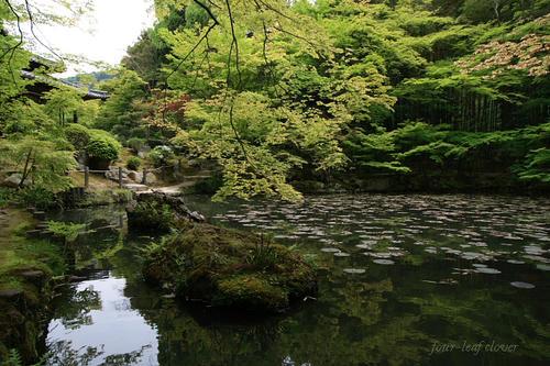 書院南庭にある池