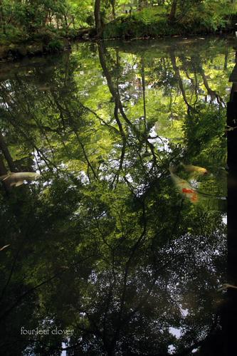 池鏡と錦鯉