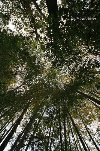 まっすぐな竹に生き方を知る